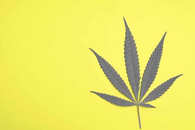 Top view of cannabis leaf on paper background with copy space tined colors of the year 2021 ultimate gray and illuminating