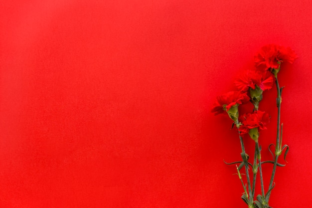 Top view of carnation flowers against bright red background with copy space