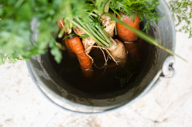 Top view carrots in a grey bucket