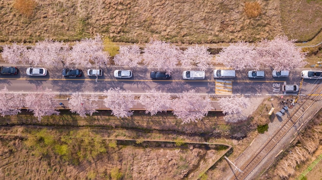 Top view of cherry blossom road in south korea