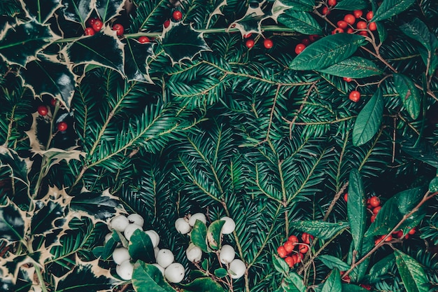 Top view christmas background of wild christmas tree branches, holy plant with berries, red rowanberries and white snowberries, central copy space with a nice frame made of berries and leaves