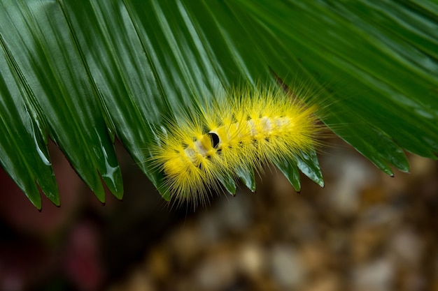 Top view close up yellow worm on green leaf in rainy season space and blur background.