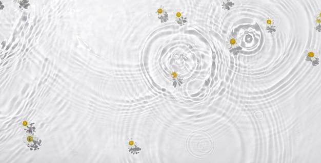 水に浮かぶ白いデイジーの花の上面図のクローズアップ