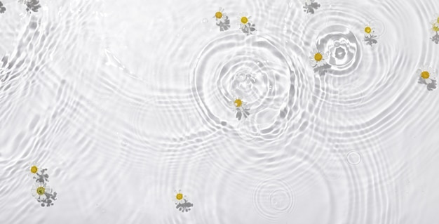 Top view closeup of white daisy flowers floating on the water