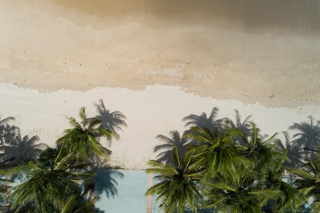 해변의 최고 전망 코코넛 야자수.