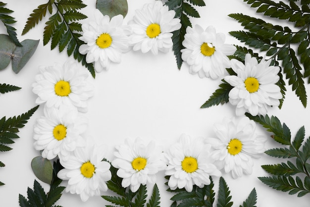 Top view collection of daisies concept