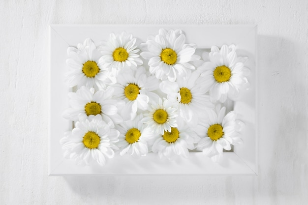 Top view collection of daisies