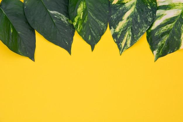 노란색 배경에 황금 pothos 잎의 상위 뷰 컬렉션 다른 패턴