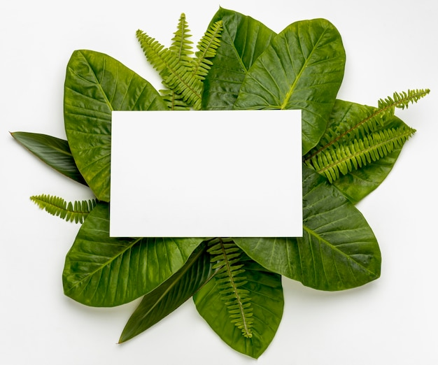 Top view collection of green leafs concept