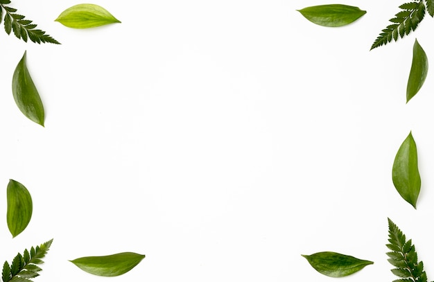Top view collection of green leaves background