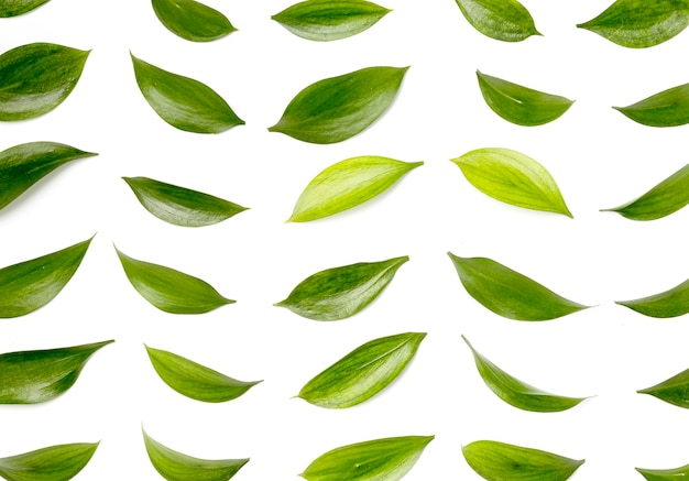 Top view collection of green leaves