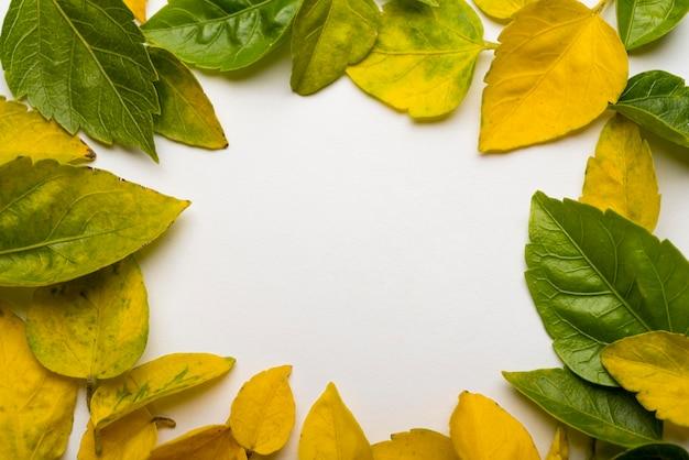 Вид сверху коллекция осенних листьев