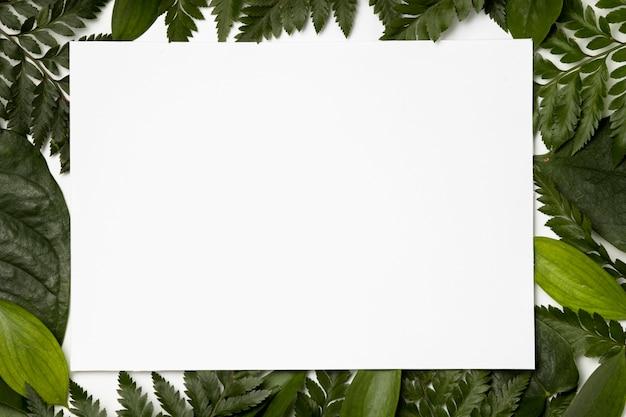 나뭇잎 배경의 상위 뷰 모음