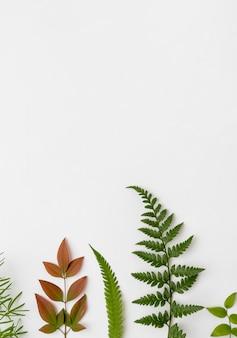 Вид сверху коллекция природных листьев