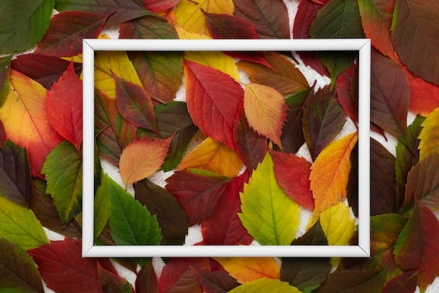Top view of colored autumn leaves with frame