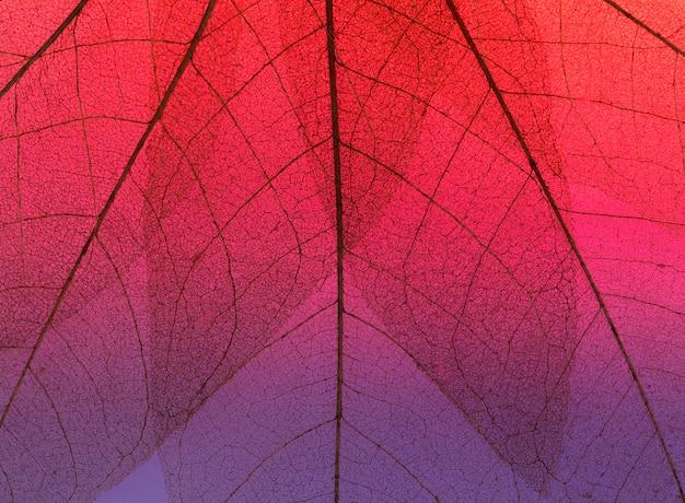 Vista dall'alto della texture foglia colorata