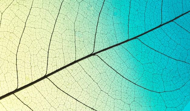Vista dall'alto della foglia colorata con texture trasparente