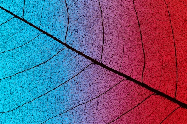 Top view of colored textured leaf