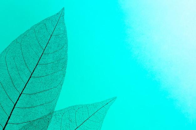 Vista dall'alto di texture di foglie traslucide colorate