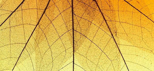Vista dall'alto della texture foglia trasparente colorata