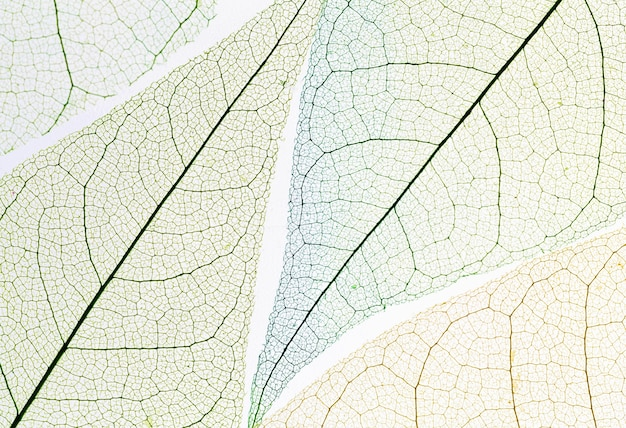 Top view of colored transparent leaf
