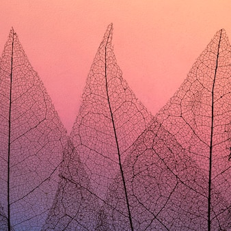 Vista dall'alto di foglie trasparenti colorate