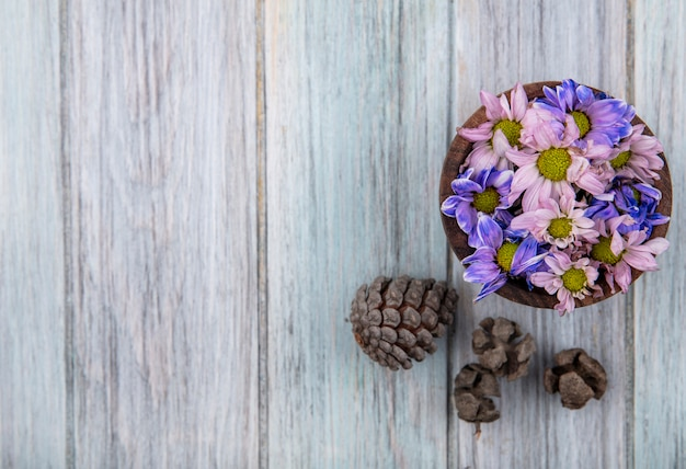 Vista dall'alto di fiori colorati adorabili della margherita su una ciotola di legno con le pigne su un fondo di legno grigio con lo spazio della copia