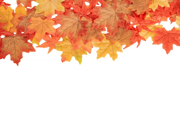 Top view colorful maple autumn leaves on white isolated, autumn concept