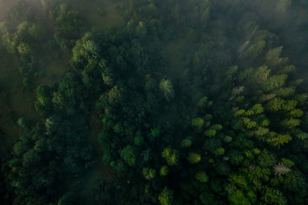 Top view of colorful mixed forest shrouded in morning fog on a beautiful autumn day