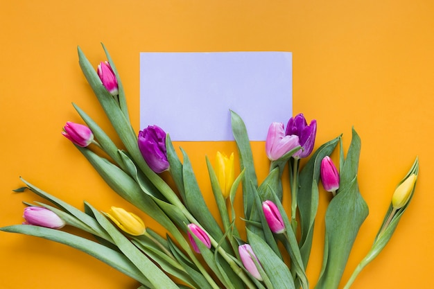Top view colourful tulip flowers with empty piece of paper
