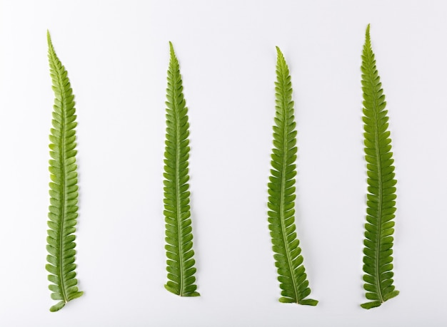 Top view of a composition of fern leaves on a white background.