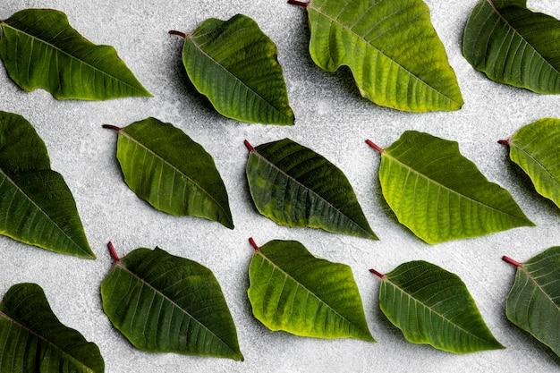 녹색 잎의 상위 뷰 구성