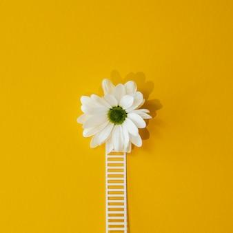 白い花と楽観的な概念の上面図構成