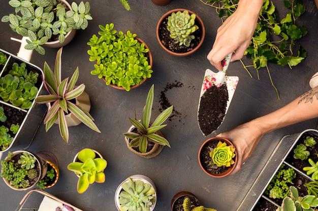 냄비에 식물의 평면도 구성