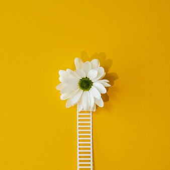 Top view composition of optimism concept with white flower