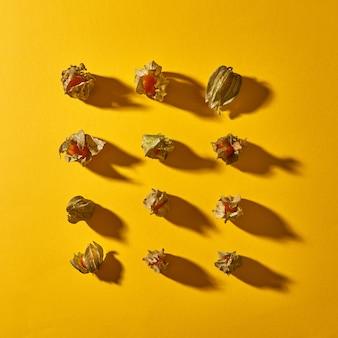 柔らかい影のある黄色の背景に明確で滑らかな対称的な列の黄色いサイサリス植物の上面図の構成。