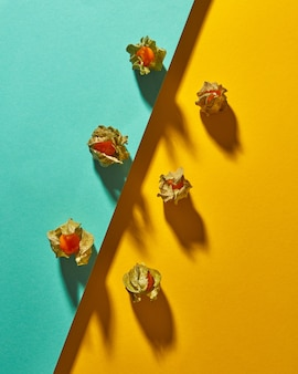 柔らかい影と斜めにダブルトーンの黄緑色の背景に黄色のサイサリス植物の上面図の構成。モダンなスタイル。