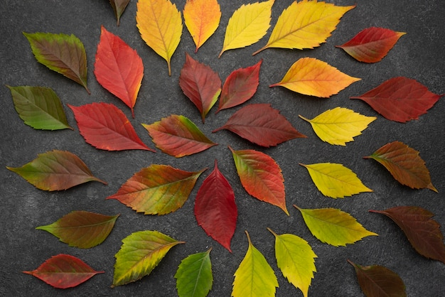 Vista dall'alto di foglie d'autunno concentriche