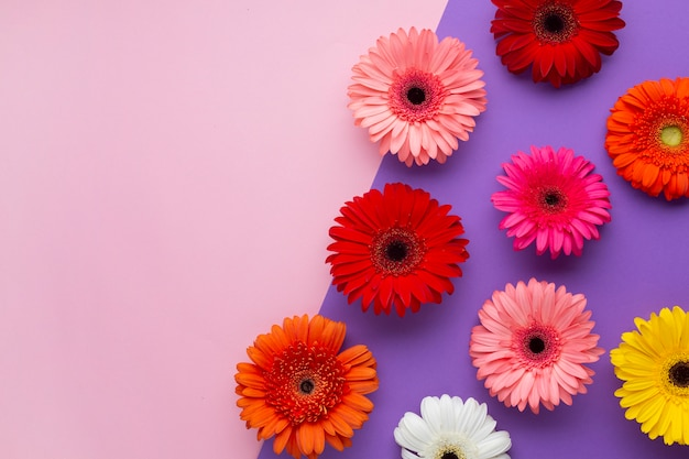 Top view contrasted background with gerbera