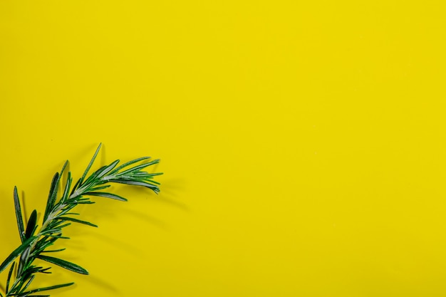 Top view copy space rosemary branch on a yellow background
