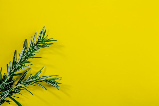 Top view copy space rosemary branches on a yellow background