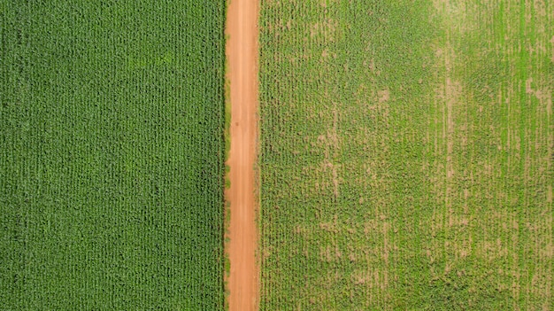 Top view of corn fields