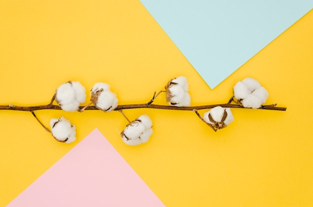 Top view cotton flowers on colorful background