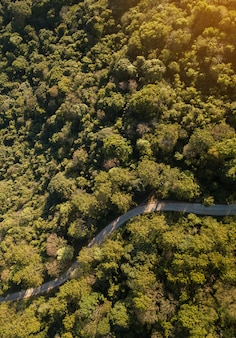 Top view of countryside road passing through the green forrest and mountain