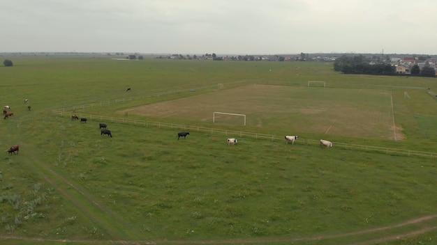 美しい青空の緑の野原にいる牛の上面図農業景観牛乳生産牛肉