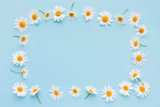 Top view daisy flowers frame