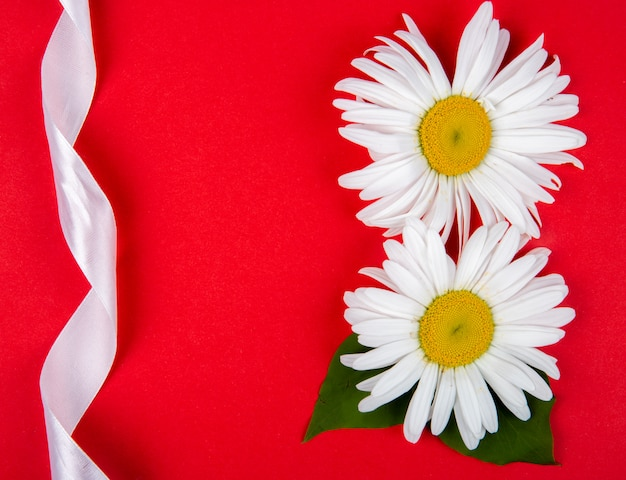 Top view of daisy flowers and white ribbon on red background with copy space