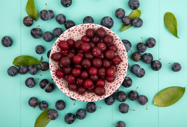 Top view of delicious red cherries on a bowl with sloes with leaves isolated on a blue background