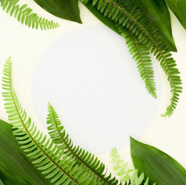 Vista dall'alto di diverse foglie e felci con copia spazio