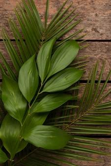 Vista dall'alto di diverse foglie di piante
